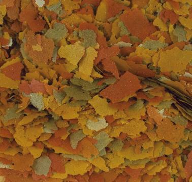 tropical-goldfish-color