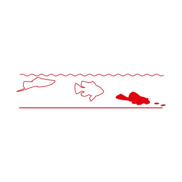 sera-catfish-tabs-xxl-2