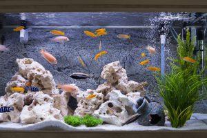 Jak założyć pierwsze akwarium?