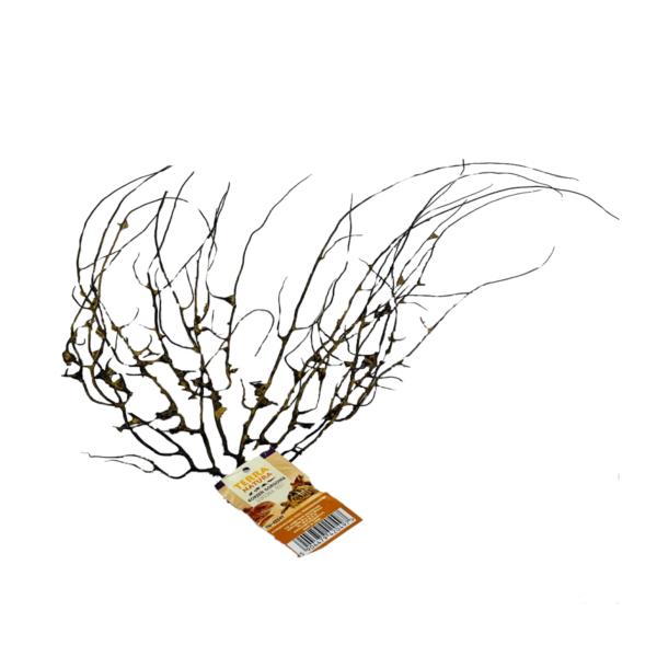 gorgonia-korzeń