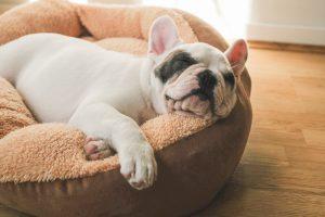 Jak nauczyć psa spania na legowisku?