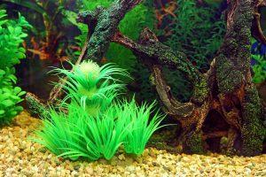 5 najładniejszych roślin akwariowych
