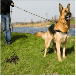 Linka treningowa z uchwytem dla psa DINGO  0,8 cm x 20 m