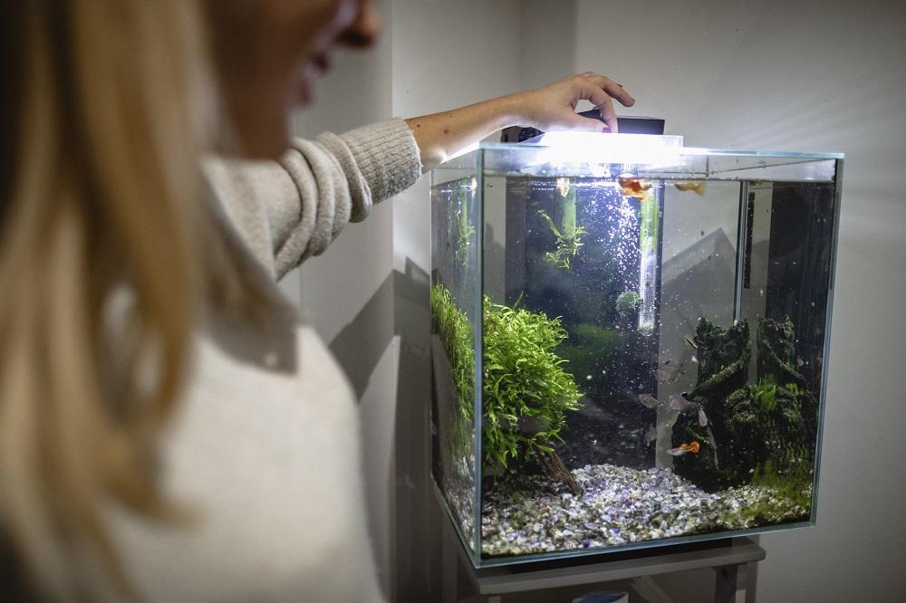 Oświetlenie do akwarium. Porady dla początkujących